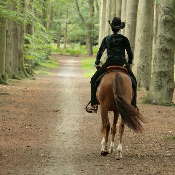 HOE WERKT HORSE & STAY?